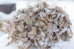 Escoba de abedul en la helada que la escoba congeló en el invierno en la nieve Imágenes de archivo libres de regalías