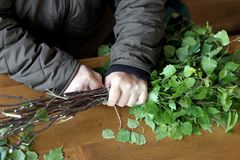 Escoba de abedul de la preparación para el baño Las manos del ` s del hombre hacen punto ramas frescas de un árbol de abedul Imagenes de archivo