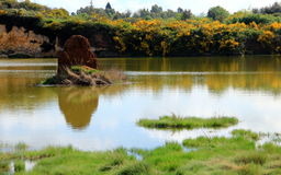 Escobas y roca sulfúrea en el lago Foto de archivo