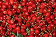 Escogido recientemente de cerezas dulces, fondo sabroso Foto de archivo libre de regalías