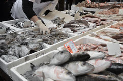 Escogiendo pescados frescos en los pescados al revés en mercado de pescados Foto de archivo libre de regalías