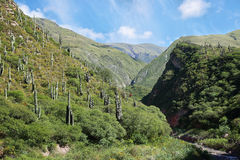 Escoipe Gorge (Quebrada de Escoipe) Stock Photos
