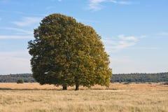 Escoja el árbol Foto de archivo libre de regalías