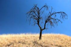 Escoja el árbol quemado en un paisaje seco Imagen de archivo libre de regalías