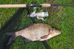 Escoja la brema común y la caña de pescar de los pescados de agua dulce con el carrete encendido Fotos de archivo libres de regalías
