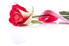 Escoja la flor color de rosa con la cinta Imágenes de archivo libres de regalías
