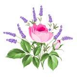 Escoja la tarjeta color de rosa Foto de archivo libre de regalías