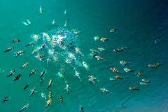 Escola de alimentação dos peixes Foto de Stock