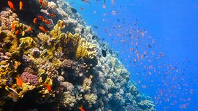 Escola de peixes tropicais em um recife de corais colorido video estoque