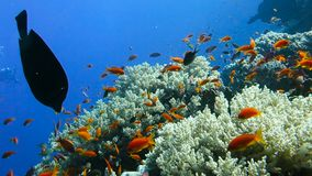 Escola de peixes tropicais em um recife de corais colorido vídeos de arquivo