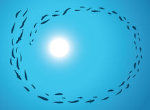 Escola dos peixes Fotografia de Stock Royalty Free