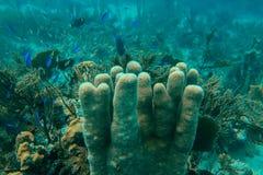 Escola dos peixes e um recife de corais subaquático fotos de stock royalty free