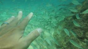 Escola dos peixes nas mãos da baía de Waimea filme