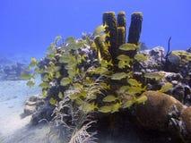 Escola dos peixes no fundo do mar foto de stock royalty free