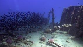 A escola dos peixes subaquáticos no fundo da destruição envia no Mar Vermelho video estoque