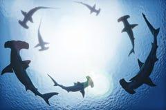 Escola dos tubarões de hammerhead que circundam de cima das profundidades do oceano ilustração do vetor