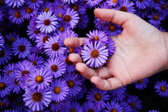Escolha da flor Fotografia de Stock