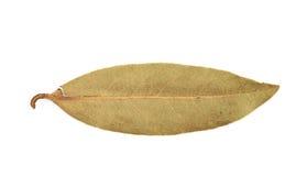 Escolha a folha de louro secada isolada Imagens de Stock