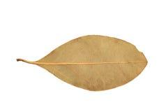Escolha a folha de louro secada isolada Foto de Stock