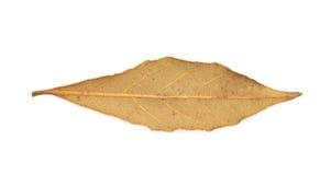 Escolha a folha de louro secada isolada Fotos de Stock