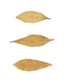 Escolha a folha de louro secada isolada Imagens de Stock Royalty Free