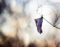 Escolha a folha secada Imagens de Stock