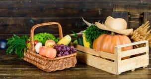 A escolha nutritiva colheita rica do outono vitamina sazonal Alimento org?nico e natural Halloween compra no supermercado imagem de stock