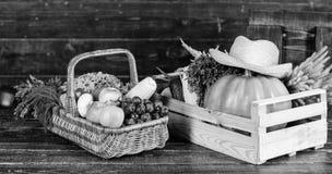 A escolha nutritiva colheita rica do outono vitamina sazonal Alimento org?nico e natural Halloween compra no supermercado imagens de stock