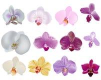 Escolha o ollection isolado das flores da orquídea Imagem de Stock Royalty Free