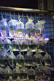 Escolha seu peixe dourado imagens de stock royalty free