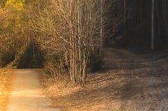 Escolha seu trajeto Fotografia de Stock Royalty Free