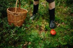 Escolhendo cogumelos e arandos na floresta no verão ou no outono adiantado Dias de verão Os cogumelos e as bagas estão crescendo  fotos de stock royalty free