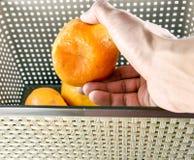 Escolhendo frutos frescos Fotografia de Stock Royalty Free