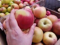 Escolhendo maçãs no dia de mercado foto de stock