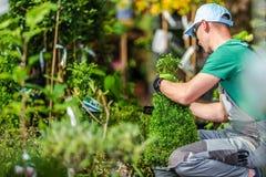 Escolhendo plantas de jardim fotografia de stock royalty free