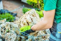 Escolhendo rochas do jardim Imagem de Stock