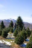 Escolhendo uma árvore de Natal Imagem de Stock