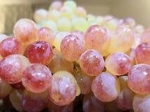Escolhendo uvas vermelhas com gotas da água e um fundo das uvas brancas imagem de stock