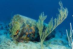 Escombros de construcción encrusted coral imágenes de archivo libres de regalías