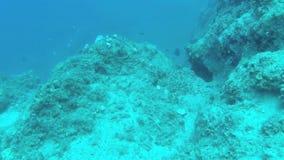 Esconde-esconde com Epinephelus Marginatus em Grécia vídeos de arquivo
