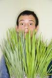 Esconder atrás das folhas Imagem de Stock