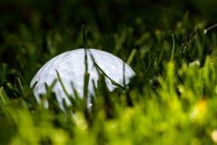 Esconder da bola de golfe Imagens de Stock