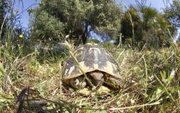 Esconder da tartaruga fotografia de stock