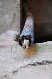 Esconder do gatinho Imagem de Stock Royalty Free