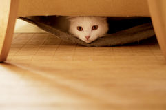 Esconder do gato foto de stock royalty free