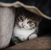 Esconder tímido do gatinho Fotos de Stock Royalty Free