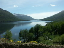 escondido lago结构树通过 免版税库存图片