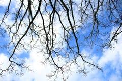Escondido sob uma árvore Olhando o céu azul imagem de stock