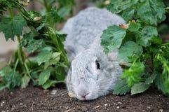 Escondite del juego del conejo Fotografía de archivo