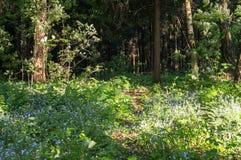 Escondrijo aislado acogedor del bosque bajo luz del sol suave, suburbios del verano de Moscú Foto de archivo